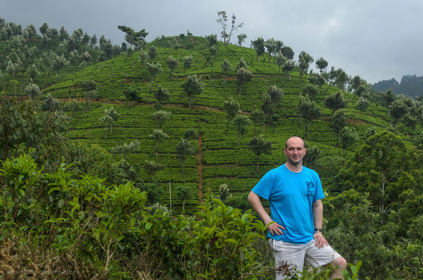 Фотография 11. Чайные плантации в горах Шри-Ланки на территории заповедника Хортон Плейнс. Отзывы об экскурсии на Пик Адама дикарями.