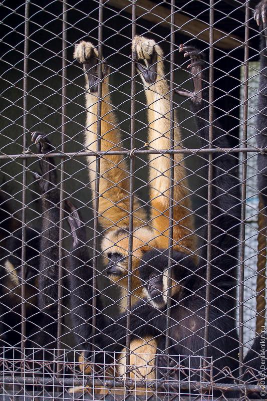 Пензенский зоопарк. Животные 18