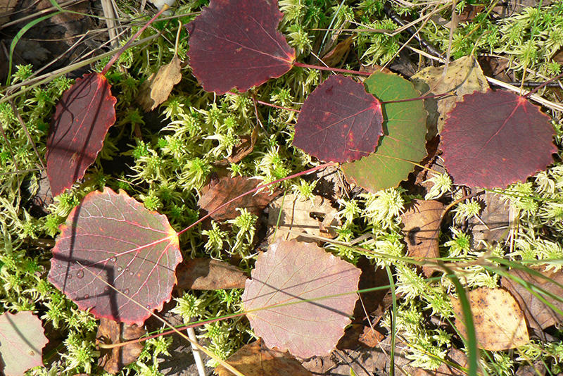 листья осень 14