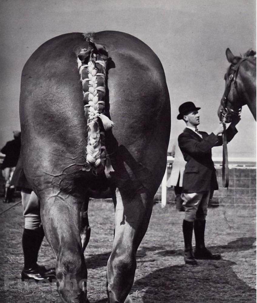 1958. Королевские скачки. Англия
