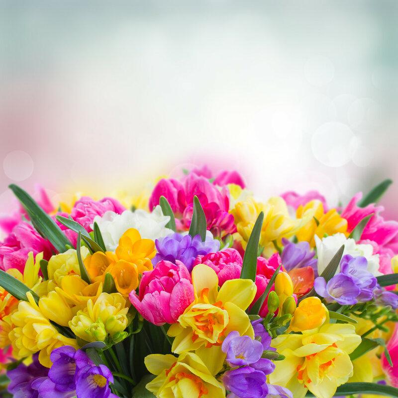 freesia and daffodil  flowers  border