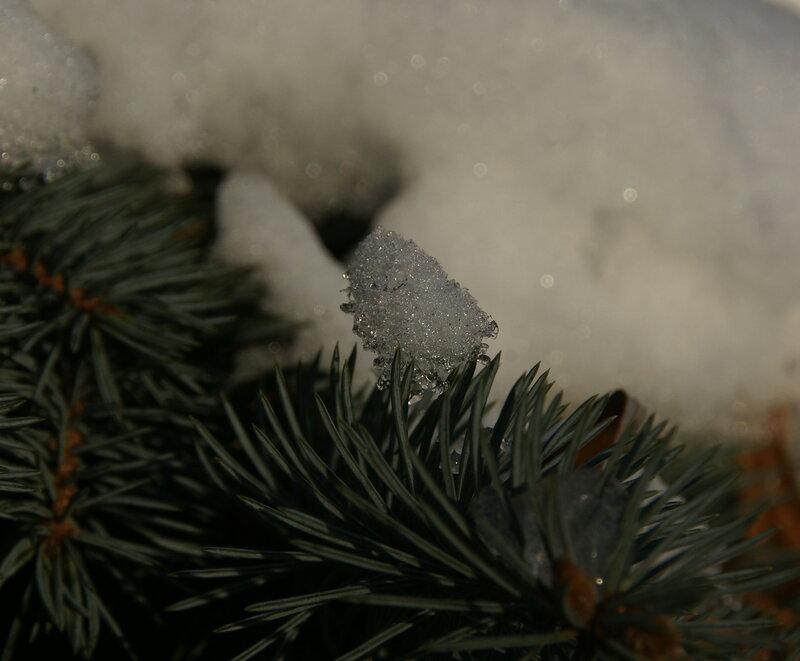 иголки со снегом.jpg