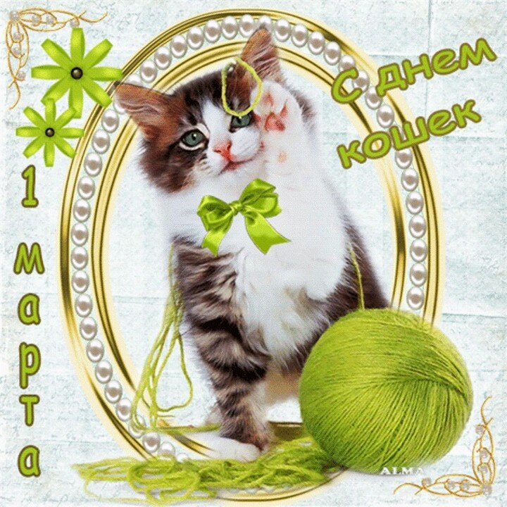 С днём кошки открытка 241
