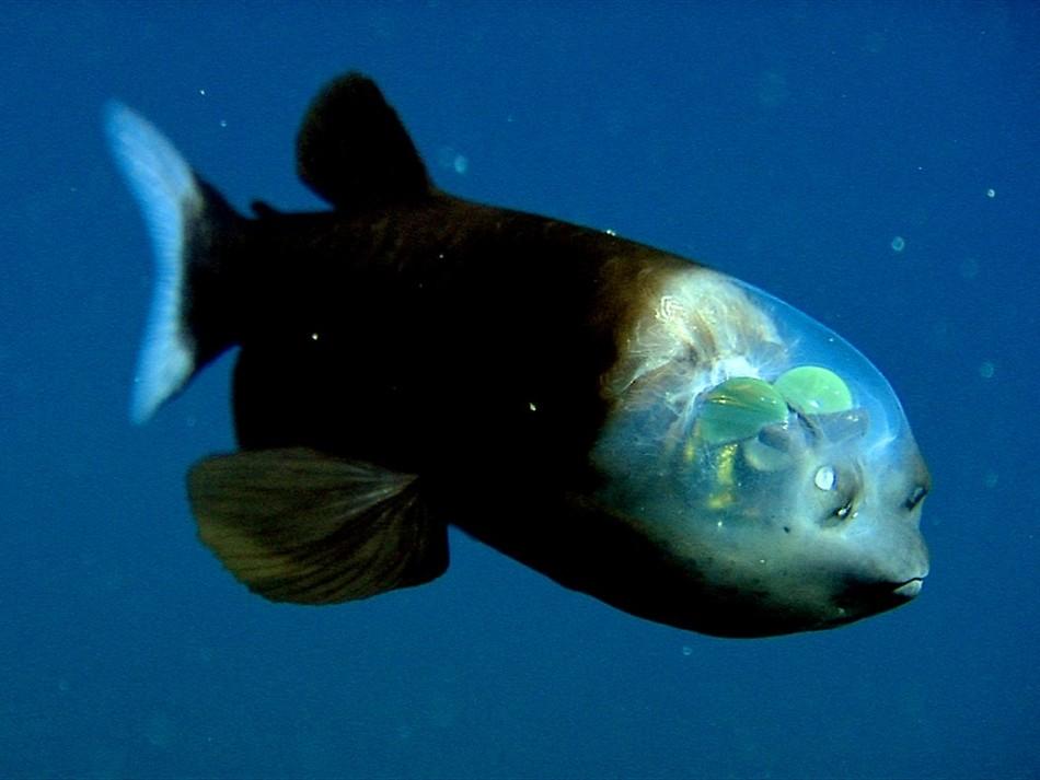 глубоководные животные фото стоит