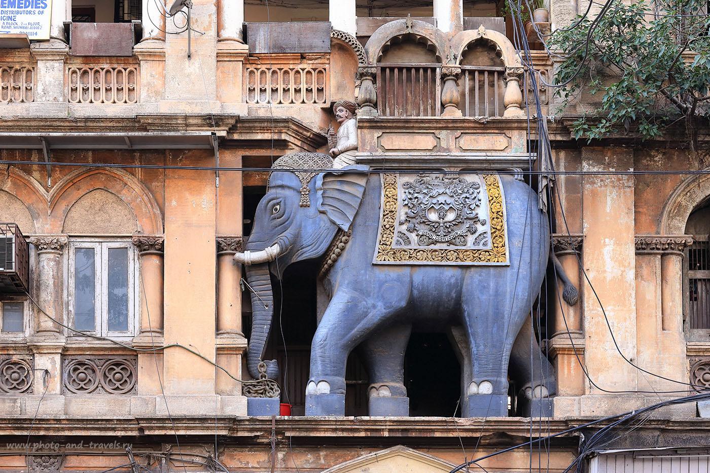 Фото 6. Слон. Что посмотреть на Гоа? Нечего там смотреть, поезжайте на поезде в Мумбаи. Отзывы об отдыхе в Индии самостоятельно. 1/80, 8.0, 640, 70.