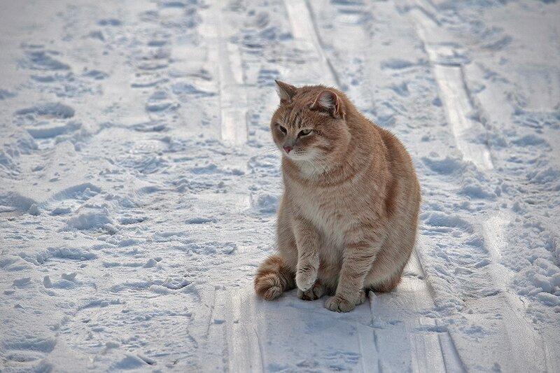 Котенька
