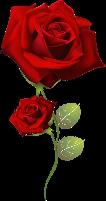 tube saint valentin rose rouge. Black Bedroom Furniture Sets. Home Design Ideas