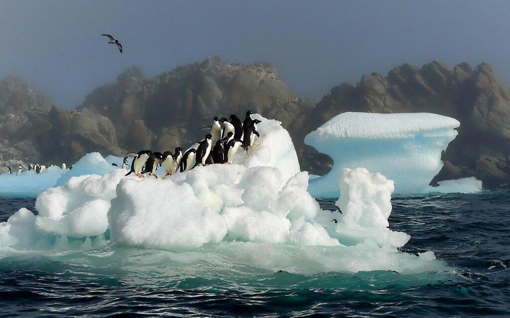 penguins-birds-jump-snow-water-antarctica-3840x2400.jpg