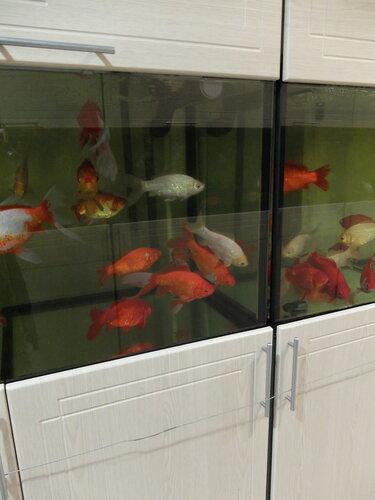 Где рыбки зимуют