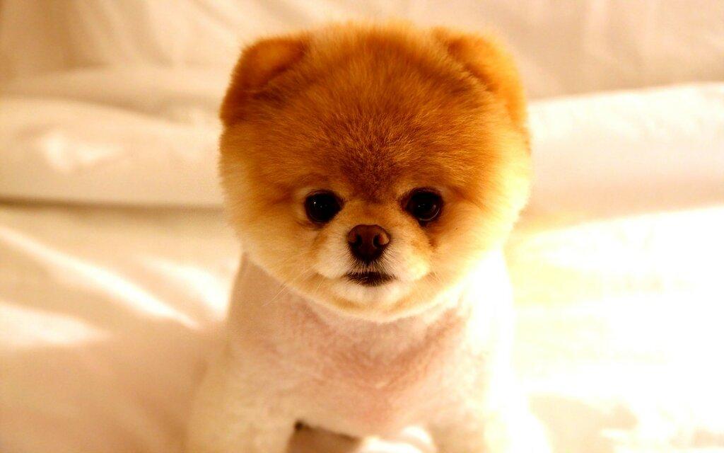 самые милые животные в мире