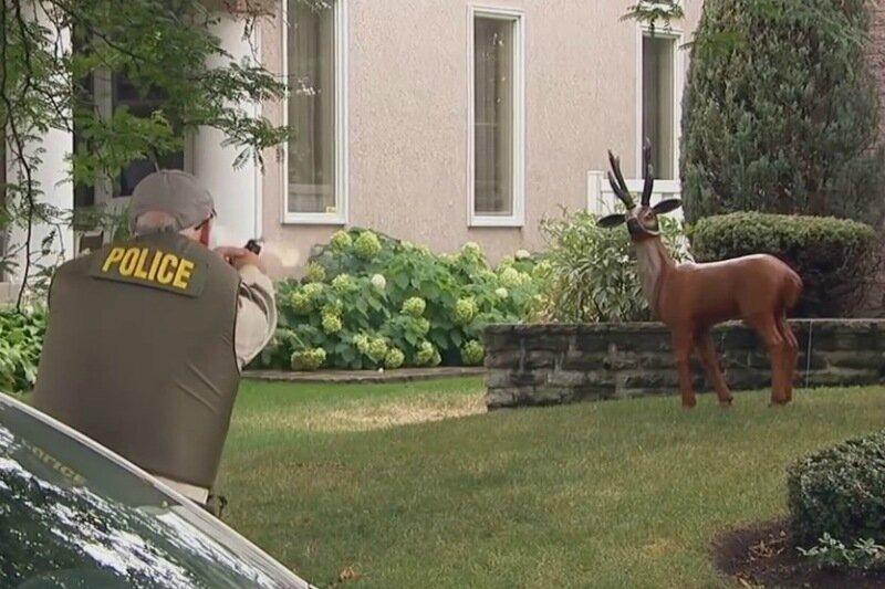 Чтобы спасти оленей, полицейский... расстрелял их
