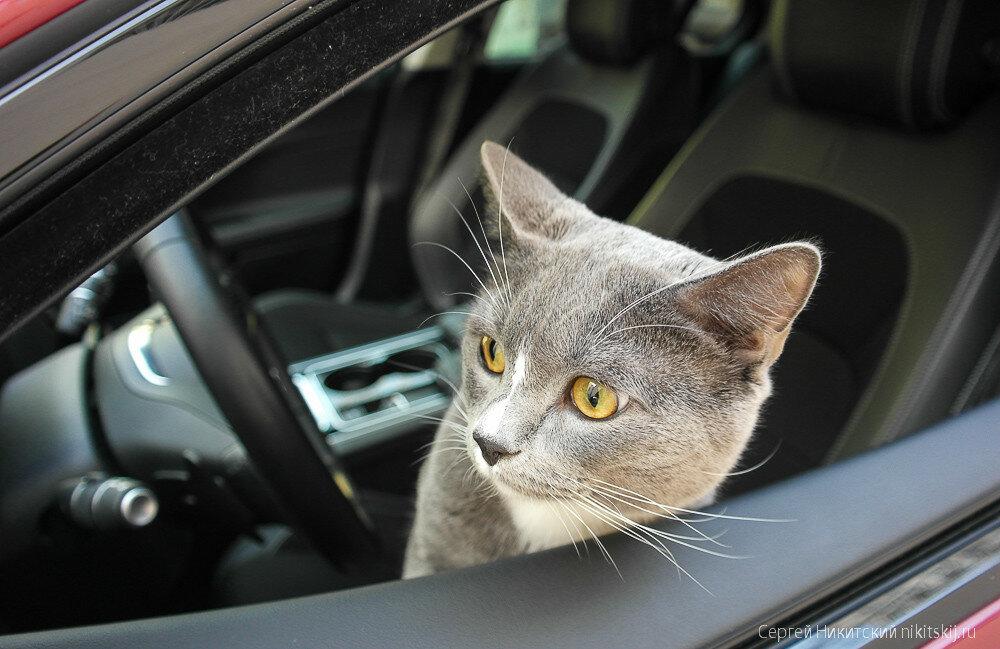 Jaguar XE - тест семейства кошачьих