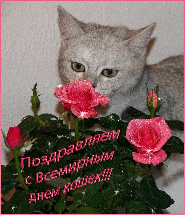 Поздравление с днём кошек
