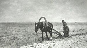 1901. В бедной стране