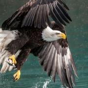 Птица у воды