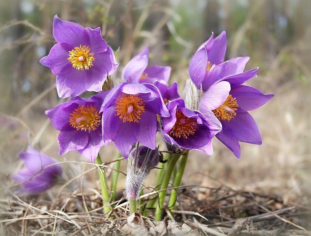 С началом  весны !