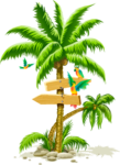 free cute summer palm tree coconut bird animation.png