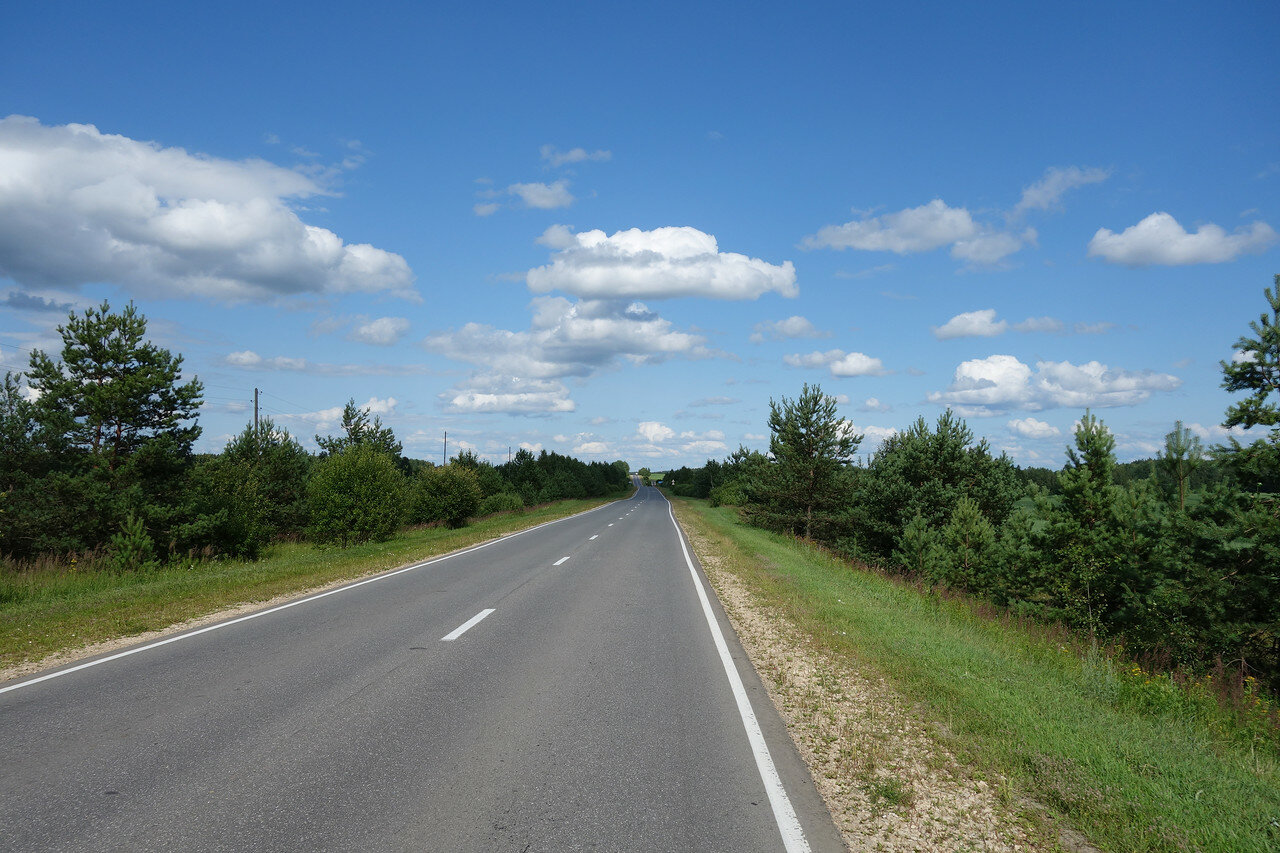 сосенки вдоль дороги