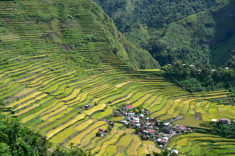 Rice terraces in Batad