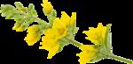 RR_SpringFling_Element (79).png