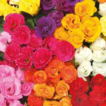 Фотографія квітів різного забарвлення