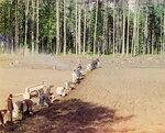 Прокудин-Горский. Монахи за работой. Посадка картофеля. [Гефсиманский скит].jpg