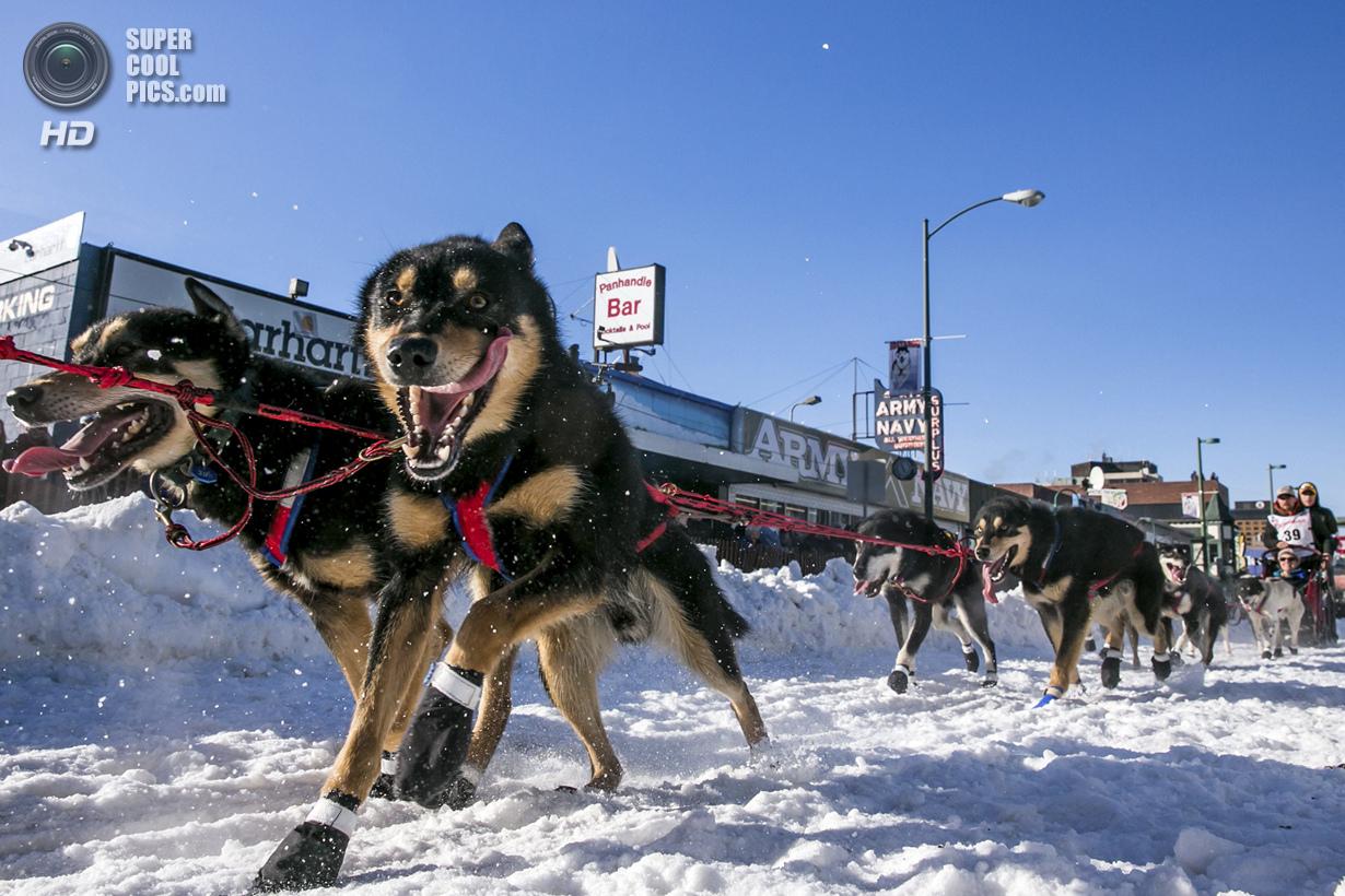 США. Анкоридж, Аляска. 1 марта. Упряжка Джейсона Макки на старте гонки «Идитарод-2014». (REUTERS/Nat