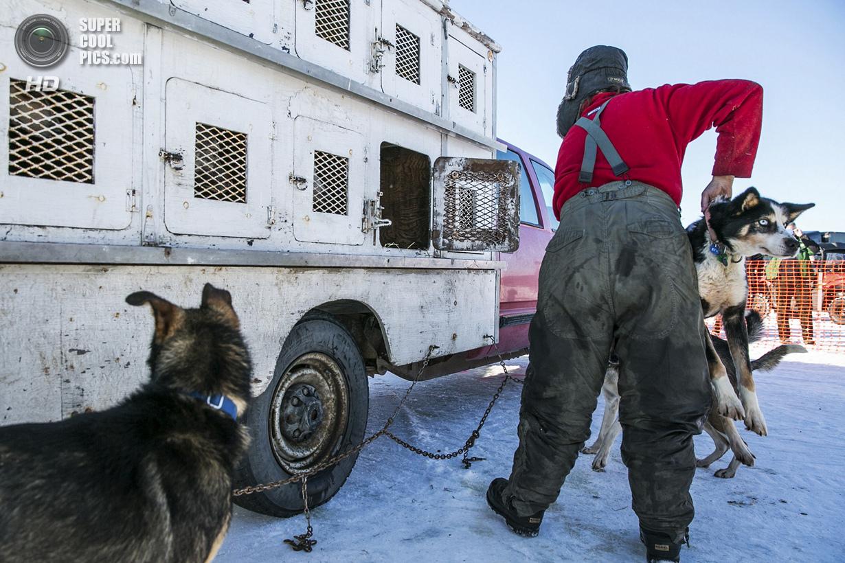 США. Уиллоу, Аляска. 2 марта. Мушер готовит своих питомцев к рестарту. (REUTERS/Nathaniel Wilder)