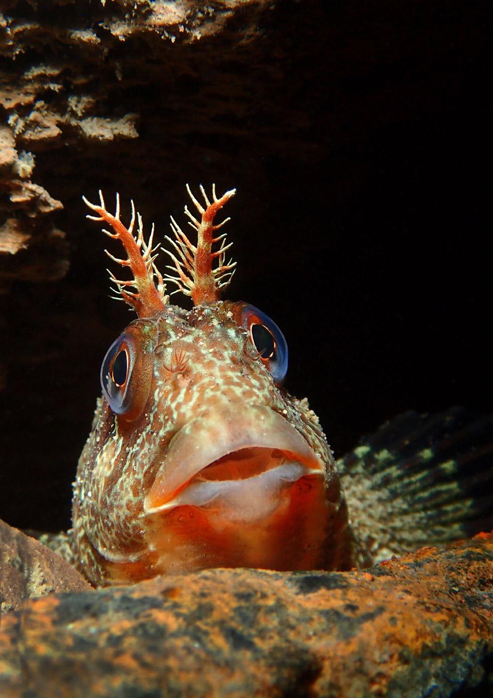 21. Деловой рак, Лестершир, Англия. (Фото Trevor Rees | Underwater Photographer of the Year 201