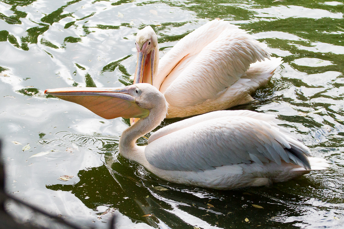 Пензенский зоопарк 3