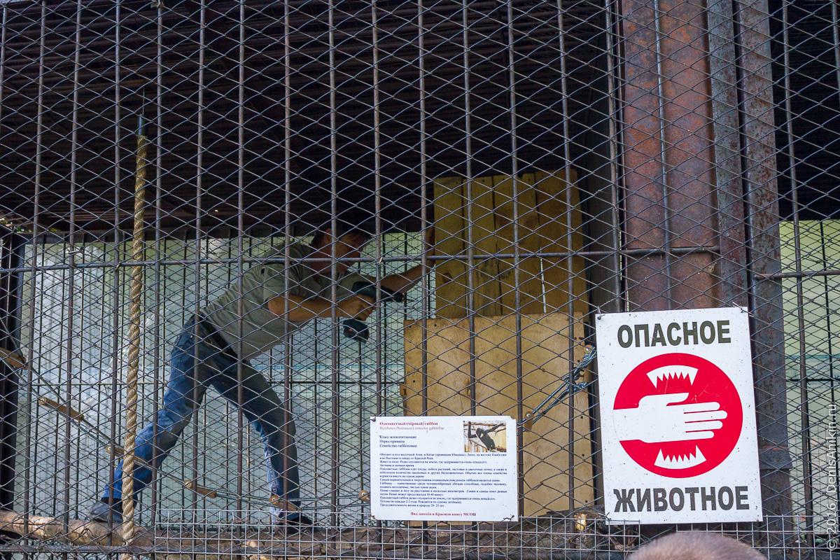 Пензенский зоопарк. Животные 24