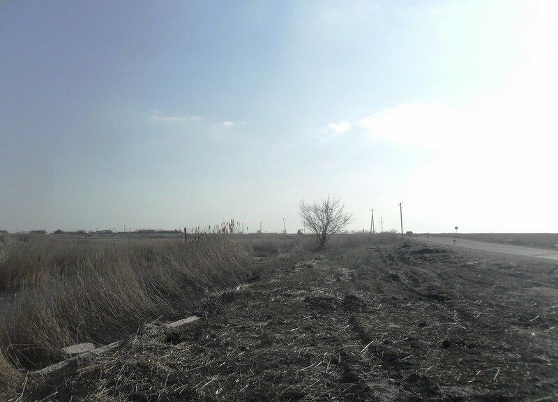 В марте, у дороги ... SAM_5846.JPG