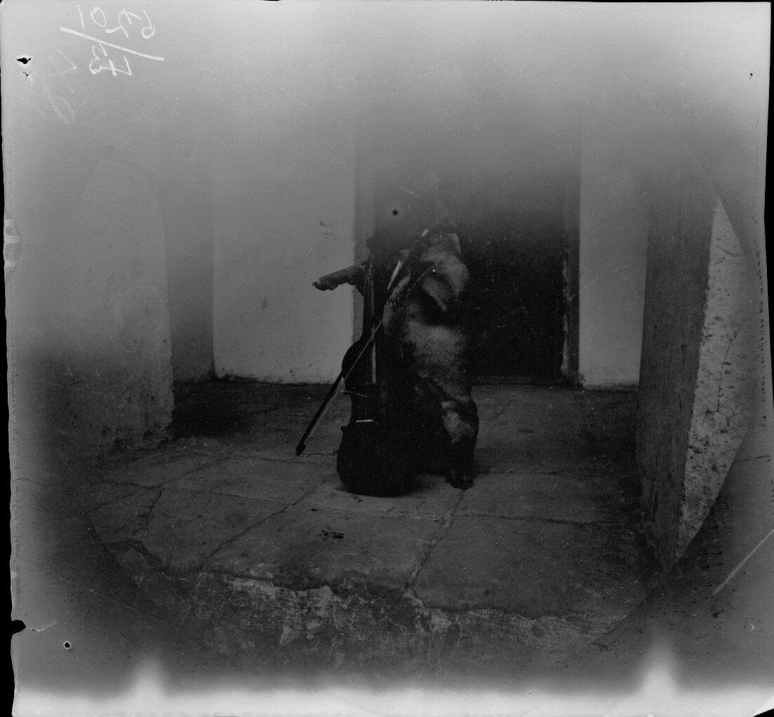 6 декабря. Ташкент. Собака мисс Бауэр играет на скрипке