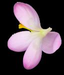 RR_SpringFling_Element (94).png