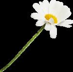 Spring_Florals_WendyP_el (31).png
