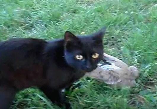 Кошка, которая приносила заключённому ужин