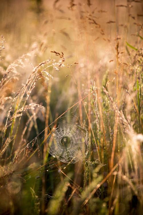 Хрупкие чудеса природы… Паутины в объективе фотографов