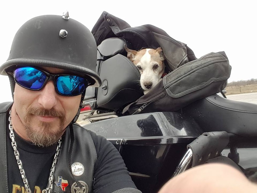 Байкер спас избитого и оставленного на дороге пса По пути к своему отцу Брэндон увидел, как водитель