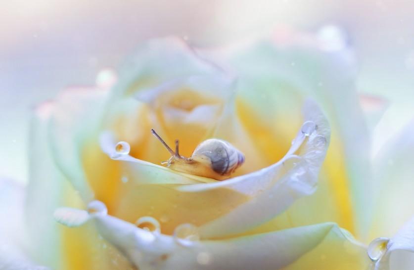 «Маленький маленький мир» от Пейлинг Ли (Lee Peiling)