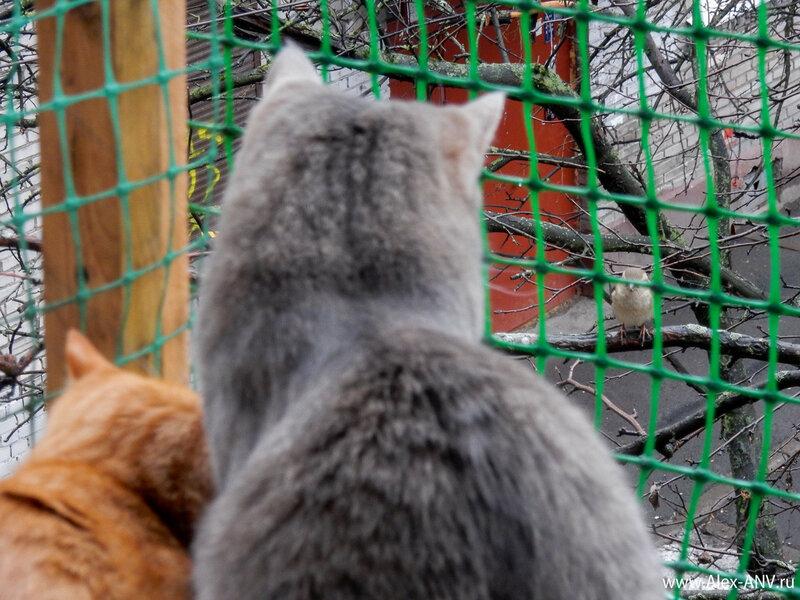 Посидели они так, грустно посмотрели друг на друга, и разлетелись-разошлись по своим делам. Воробей полетел гнездо вить и самок клеить, а кошки поскакали миски инспектировать.