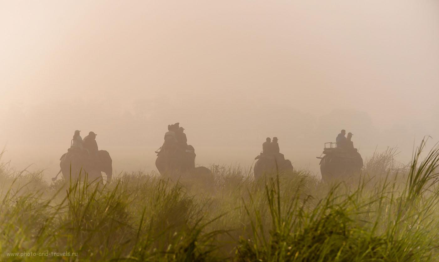 Фото 10. Слоновье сафари в парке Kaziranga National Park. Отчеты туристов о путешествии по Индии самостоятельно. Фотокамера Никон Д610, телеобъектив Никон 70-300. Параметры съемки: 1/1600, 4.8, 200, 125.