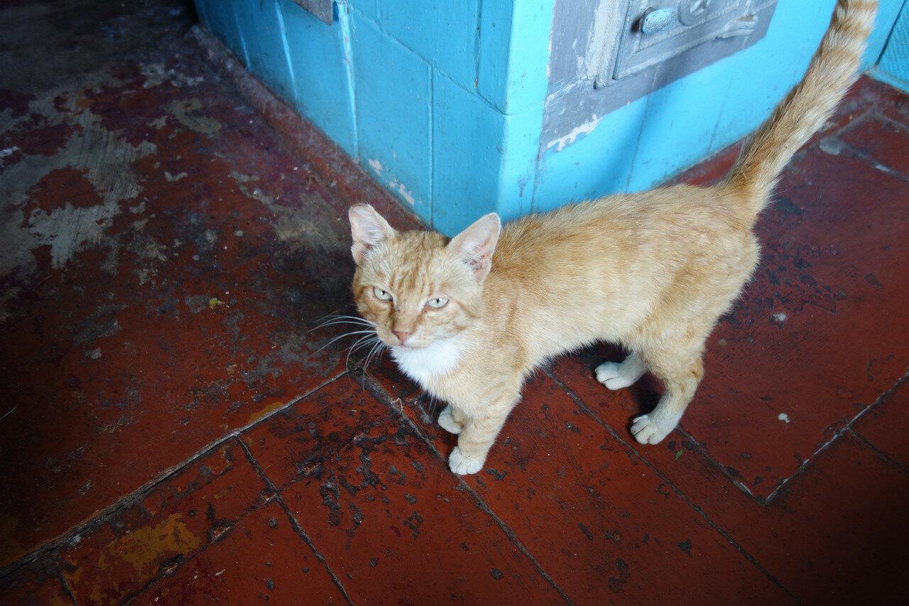 кот из соседнего дома