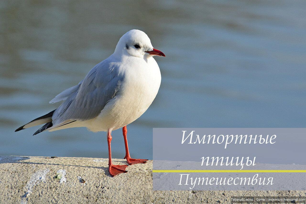 Импортные птицы