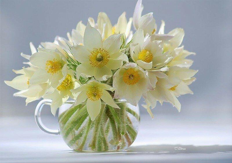 Поздравления с весной в картинках