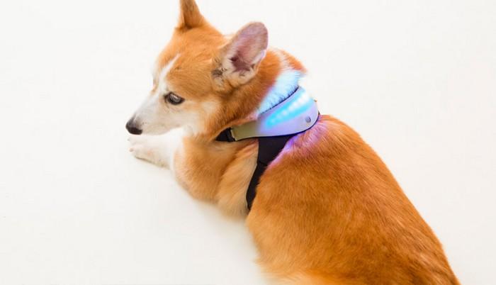 Как понять, что чувствует собака: ошейник Inupathy К примеру, когда животное чем-то обеспокоено или