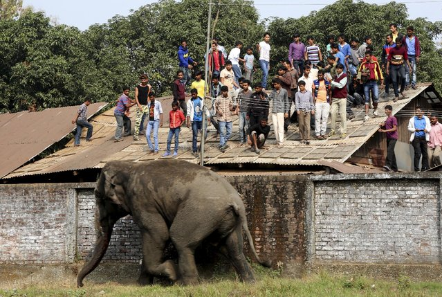 People watch from a rooftop as a wild elephant runs after it was tranquilized in Siliguri, India, Fe
