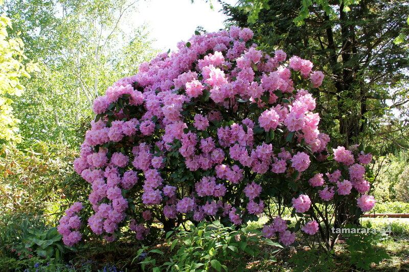 Гора цветов.