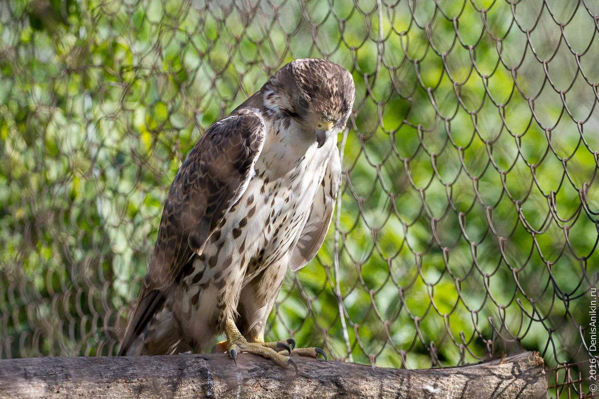 Пензенский зоопарк 11