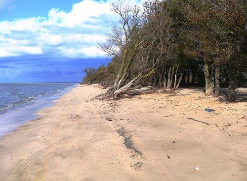 Пляжная благодать далёких берегов ... SDC14880.JPG