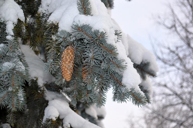 ещё зима 5